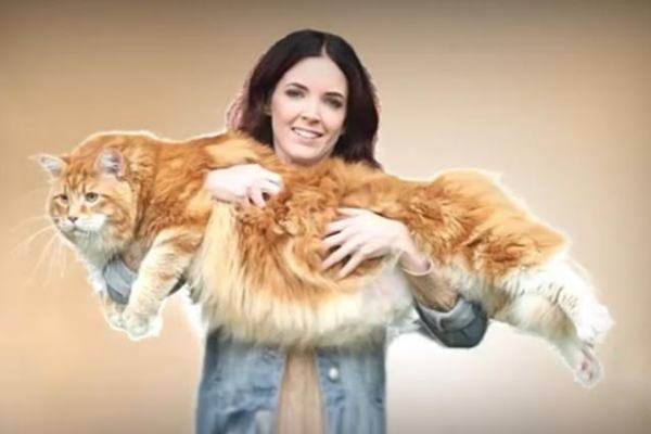 Omar il gatto più grande del mondo