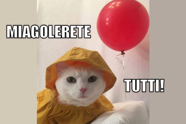 Il gatto It