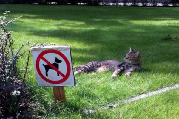La soddisfazione di un gatto