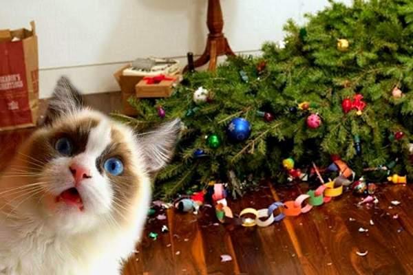 Albero di Natale vs gatto