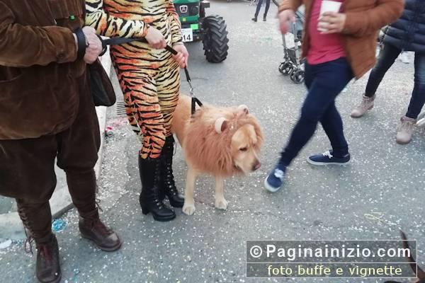 Un leone al Carnevale