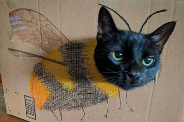 Il gatto volante