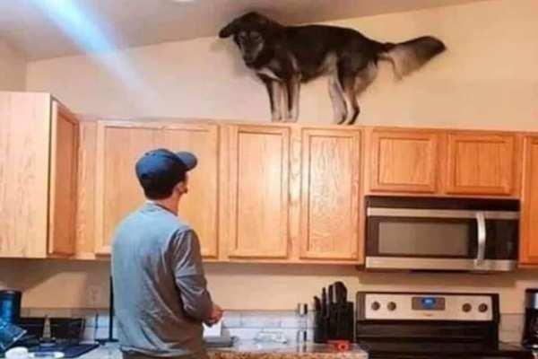 Cani e quarantena