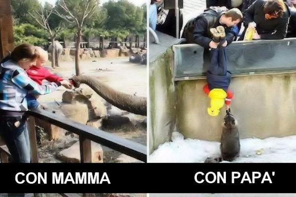 Visitare lo zoo