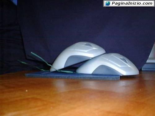 Mouse inseparabili