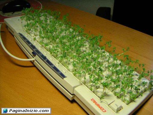 Una tastiera rigogliosa!