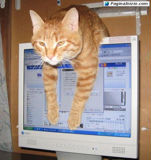 Davvero comodo questo monitor!