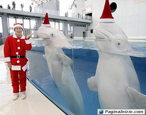 Delfini vestiti a festa