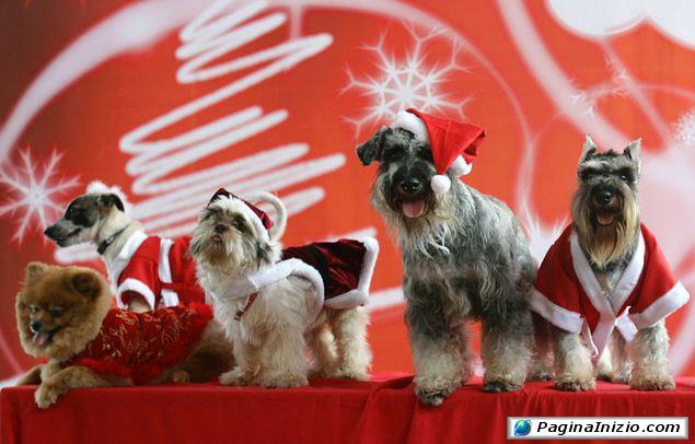 I nuovi aiutanti di Babbo Natale