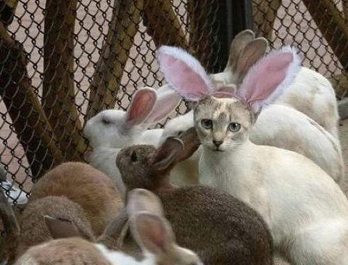 Dite che assomiglio a un coniglietto?