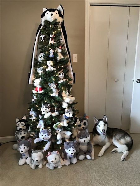 Husky albero di Natale