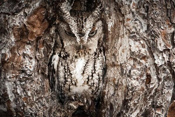 Cosa si nasconde dentro al tronco?