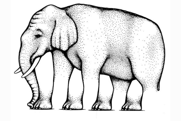 Quante zampe ha l'elefante?