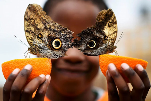 Occhi di farfalla