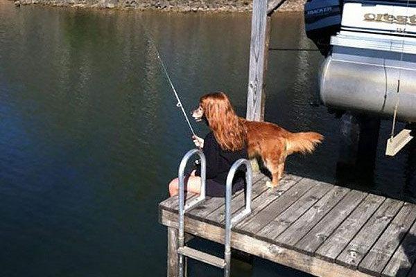 Il cane pescatore