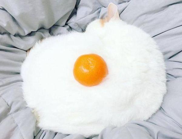 Un uovo al tegamino...morbidoso
