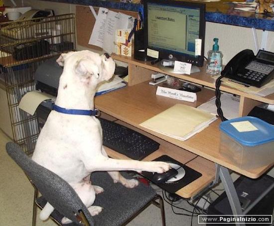 Quando si dice un lavoro da cani...