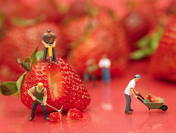 Gli uomini delle fragole