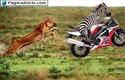 Evoluzione della specie...