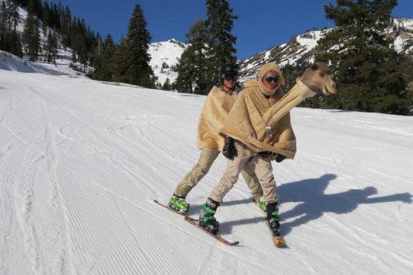 Il cammello delle nevi