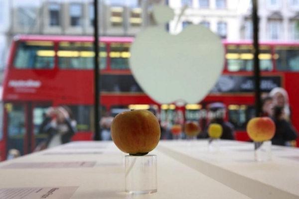 Un apple store cos� non lo avete mai visto!
