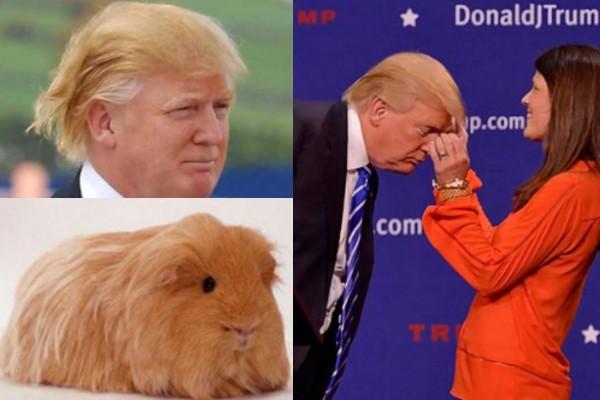 Trump confessa, non ho il toupet ma uso la lacca