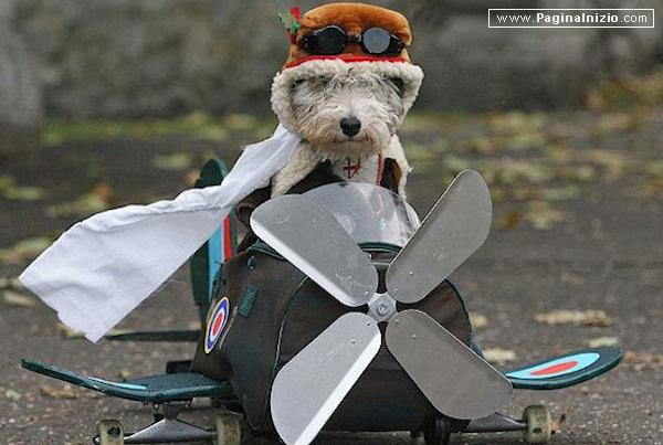 Il cane pilota!