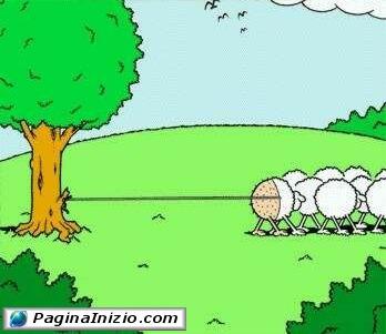 Come nasce un gomitolo di lana...