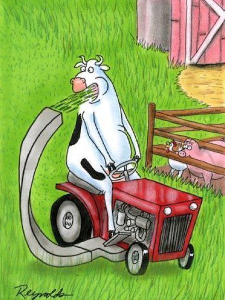 Le mucche non sono pazze, sono furbe!