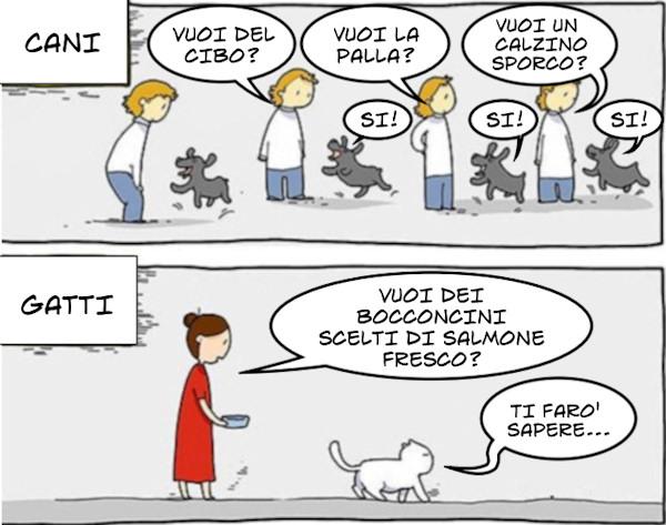 Differenze tra cani e gatti...