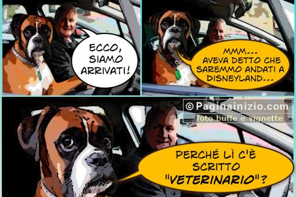 Cani dal veterinario...