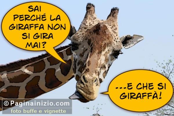 Il segreto della giraffa!