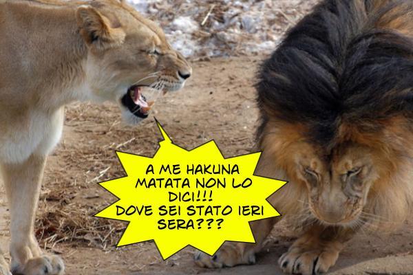 La notte leoni