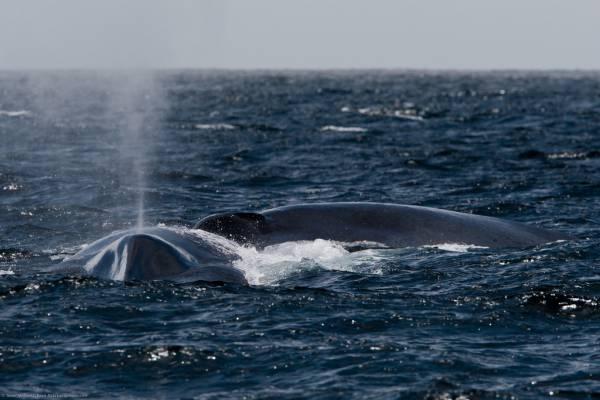 Qual è l'animale più grande mai esistito?