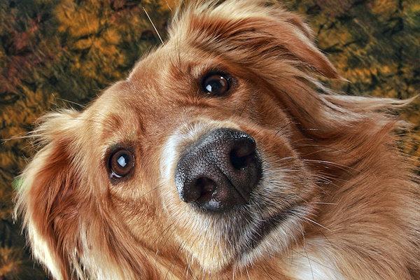 Come mai i cani hanno il naso bagnato?