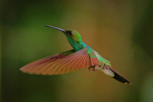 l'L'uccello che vola all'indietro