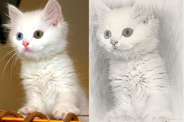 Come trasformare una foto in un disegno a matita for Disegni a matita di cani
