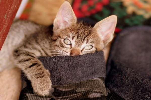 Come capire se il gatto non si sente bene
