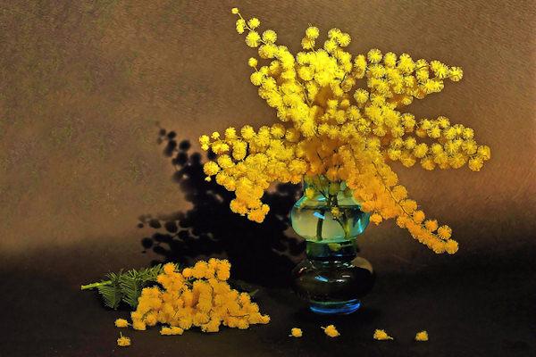 L'usanza di regalare la mimosa è nata l'8 marzo 1946 in Italia