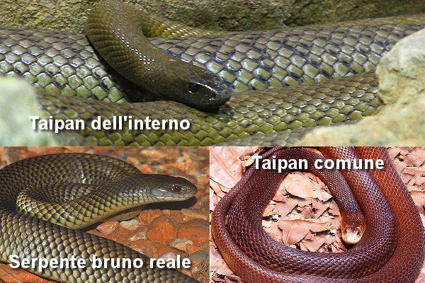 Immagini serpenti velenosi serpenti velenosi foto delle for Quali sono i rettili