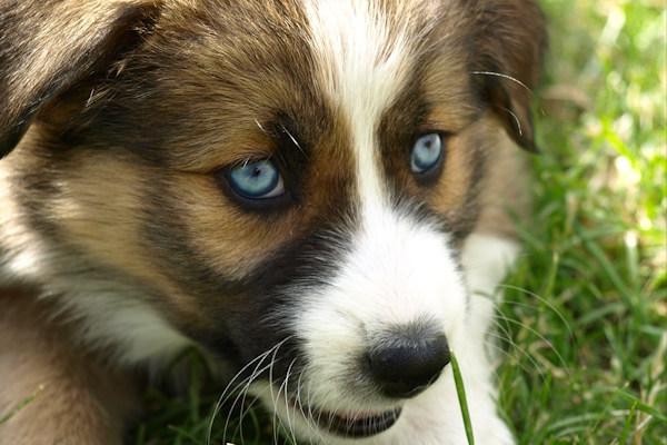 I cani vedono a colori o in bianco e nero - Pagine a colori in bianco e nero ...