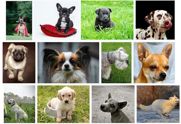 Quanto Vive Il Cane