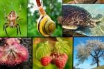 La deforestazione minaccia la sopravvivenza della biodiversità