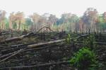 Giungla incendiata nel Messico meridionale