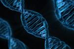 Catene di DNA