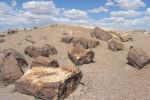 Silicizzazione dei tronchi della foresta pietrificata in Arizona
