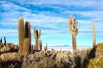 L'Isla del Pescado si trova in mezzo al deserto di sale più grande del mondo