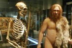 Ricostruzione di un Homo neanderthalensis a partire da uno scheletro