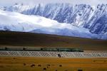 Un treno che viaggia sulla linea ferroviaria più alta del mondo