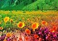 <b>Fuga dalla valle fiorita - Flower peak valley escape